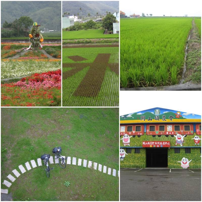 image grid rice paddy fields and Farmers association