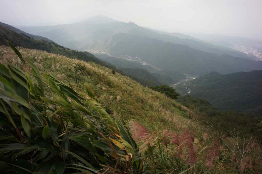 silver grass at the peak