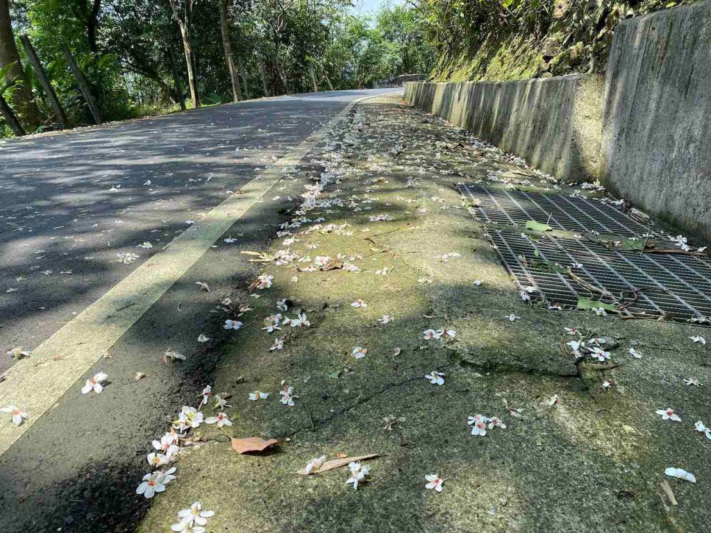 Tung flowers on the road